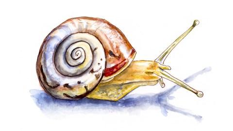 #WorldWatercolorGroup - Day 11 - Like A Little Snail - Doodlewash