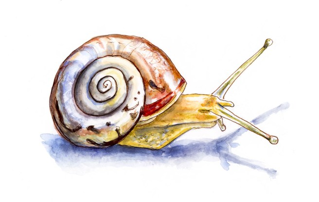 #WorldWatercolorGroup - Day 11 - Like A Little Snail - Doodlewash