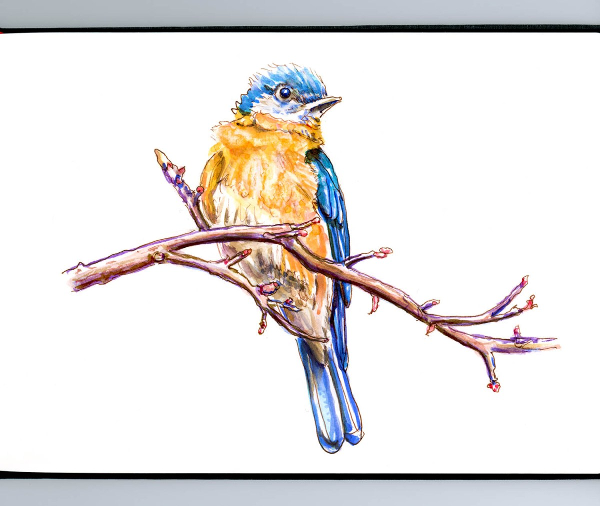 #WorldWatercolorGroup - Day 16 - A Bird In A Tree - Bluebird - Doodlewash