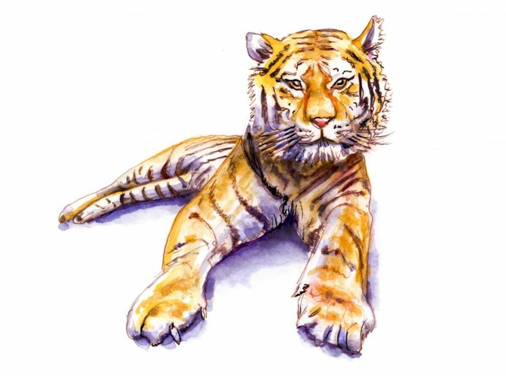 #WorldWatercolorGroup - Day 4 - Wild Thing - Bengal Tiger - Doodlewash