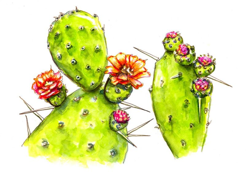 #WorldWatercolorGroup - Day 9 - Flowers On A Cactus - Doodlewash