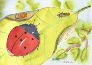 Lady Beetles, in all of their life stages. Lady Bugs