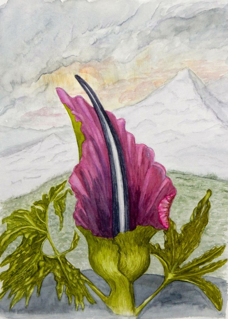 World Watercolor Group™. THE DRAGON ARUM taken from an original oil painting by P Henderson i
