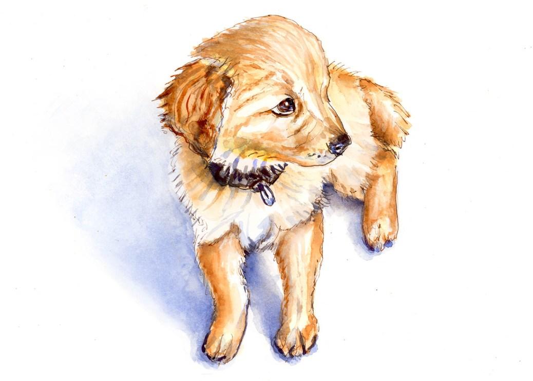 #WorldWatercolorGroup - A Cute Puppy Watercolor - Doodlewash