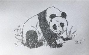 Day 37 Panda 20180330 Panda dag 37