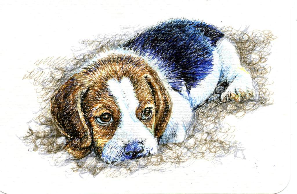 Postcards for the Lunch Bag. Today, my hubby took a Beagle in his lunch bag. Did you know that Beagl