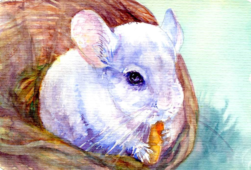 Welllll…. not exactly a bunny. I did those last week. But a chinchilla – that's th