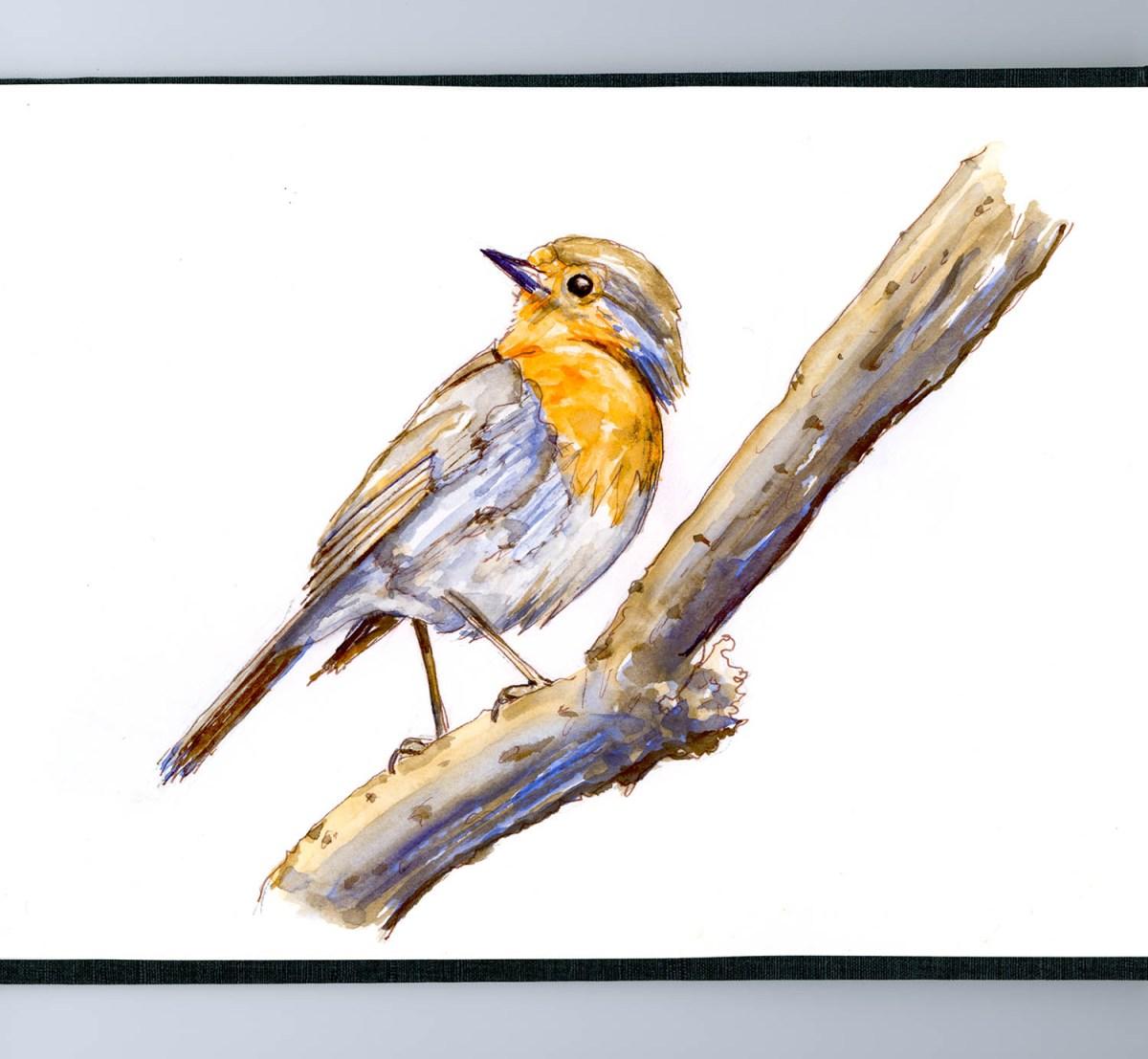 Draw A Bird Day April 8th Doodlewash