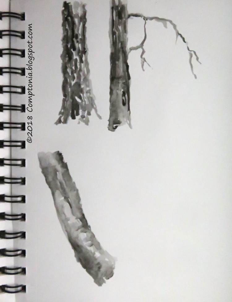 little studies of tree bark: red oak, eastern hemlock, black birch IMG_0029