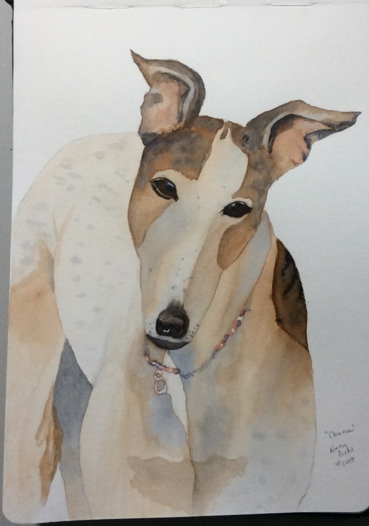 """""""Chance"""" my lovely Greyhound who died a little over a year ago. He was a very good boy."""