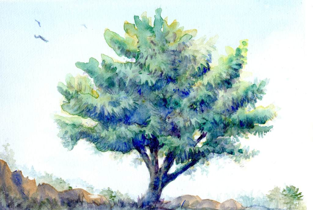 Playing with my Aquanut paints and new Harmony paper. Lone Tree-Aquanut Watercolor on Hahnemühle Ha