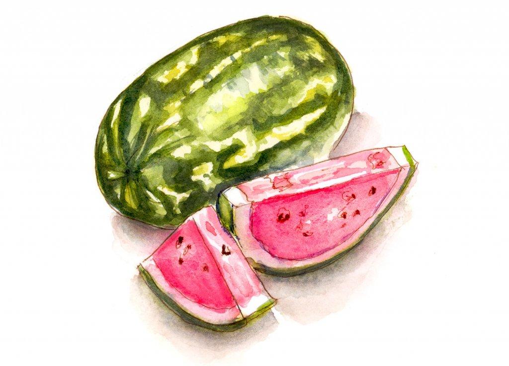 Day 20 - Watermelon Watercolor Unexpected Berries - #doodlewashMay2018 - Doodlewash