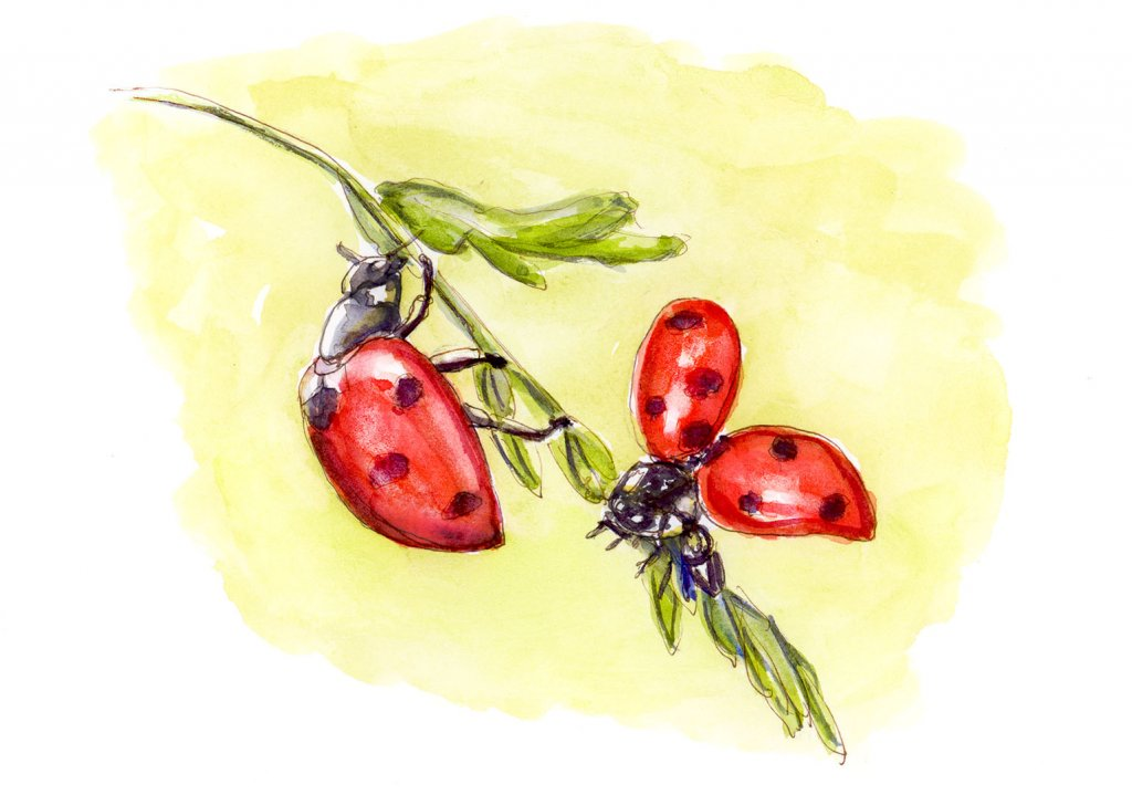 Day 22 - Ladybug Love Watercolor - #doodlewashMay2018 Doodlewash