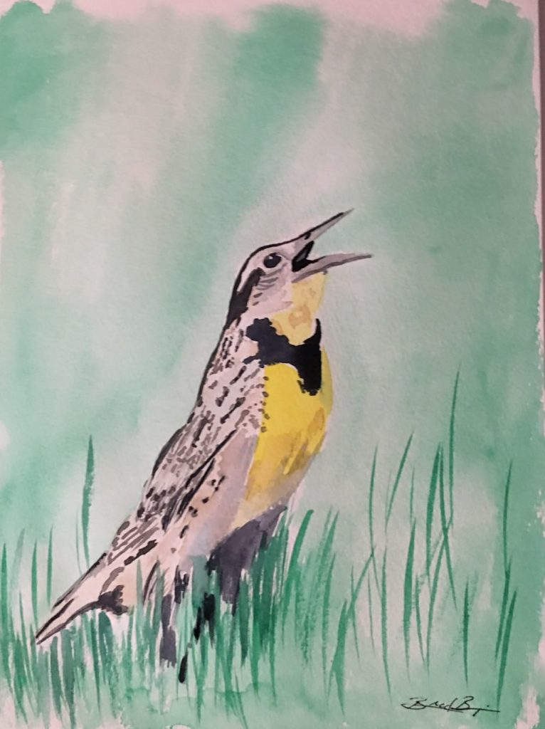 Western Meadowlark – Kansas, Montana, Nebraska, North Dakota, Oregon, Wyoming IMG_0883