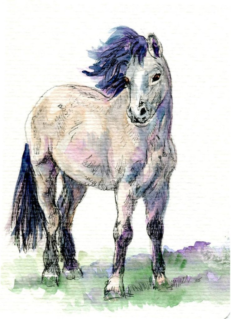 Welsh Pony-Technical Pen & Aquanut Watercolor on Hahnemühle Watercolor Postcard-Rough Welsh Pon