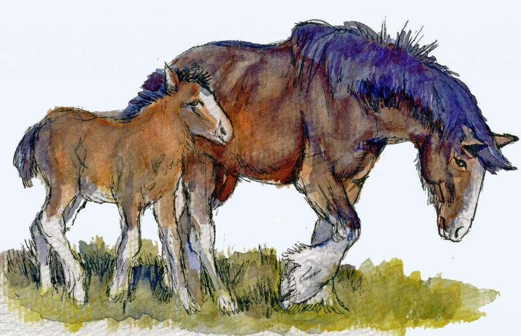 Postcards for the Lunch Bag -Clydesdale Mare & Foal-Zensations Technical Pen, and Charlie'