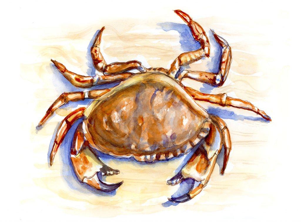 Day 8 - Dungeness Crab Walking Sideways - #doodlewashJune2018 Doodlewash