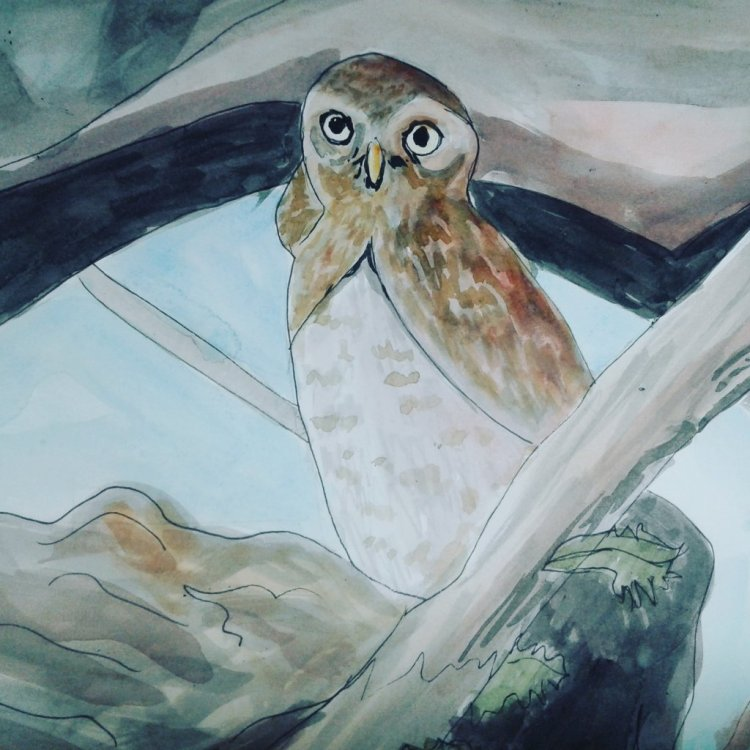 Owl for wildlife! Not my best but always learning! IMG_20180604_212202_704