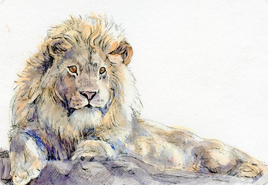 How To Paint A Lion In Watercolor - Final Image - Doodlewash