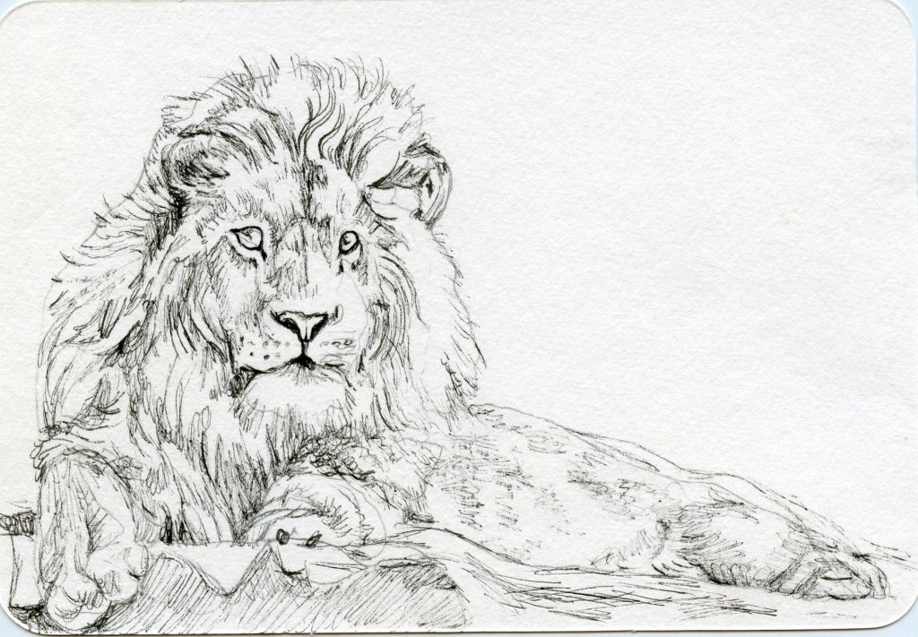 How To Draw A Lion - Doodlewash