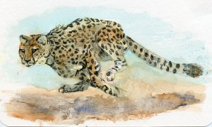 Today, my hubby took a Cheetah in his lunch bag.#WorldWatercolorMonth Day 13 #FastAndLoose Postcards