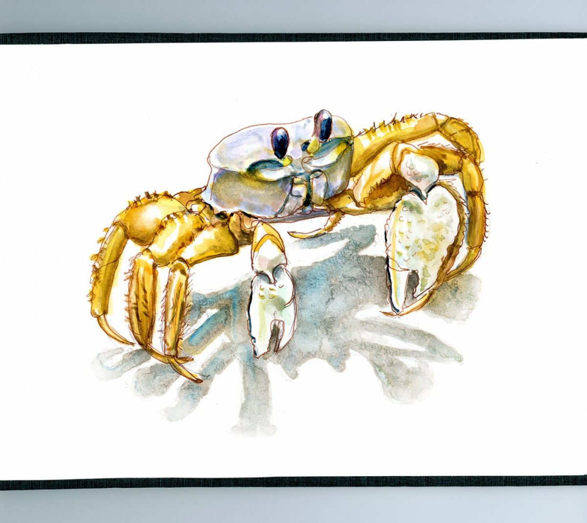 Day 15 - World Watercolor Month On The Beach Ghost Crab - Doodlewash