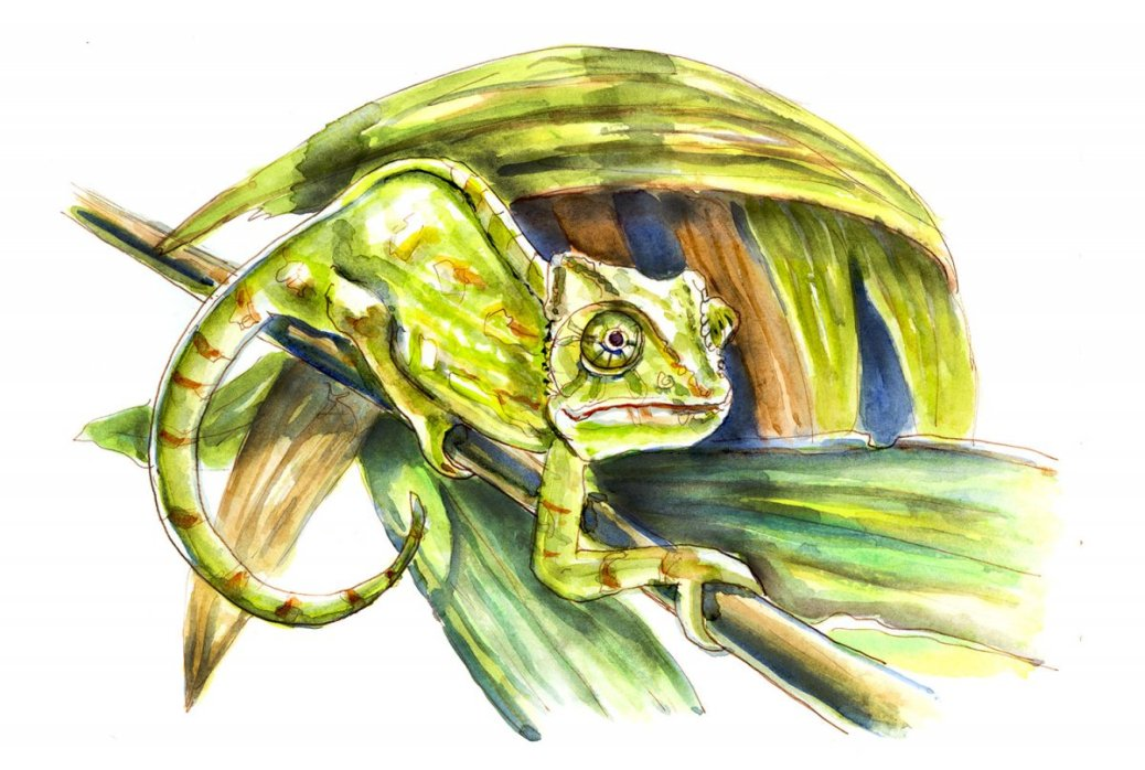 Day 18 - World Watercolor Month In The Jungle Chameleon - Doodlewash