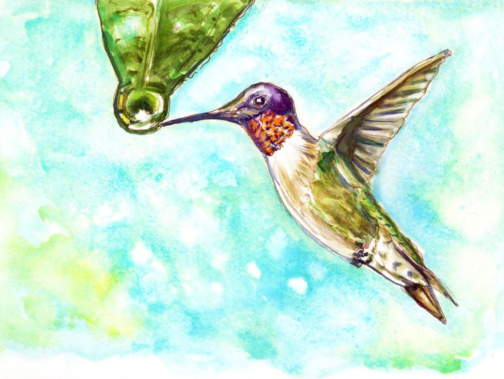 Day 19 - World Watercolor Month Rainy Days Hummingbird - Doodlewash