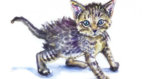 Day 23 - World Watercolor Month Furry Creatures Kitten - Doodlewash