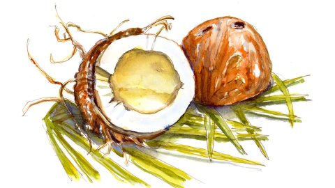 Day 30 - World Watercolor Month Exotic Location Coconut - Doodlewash