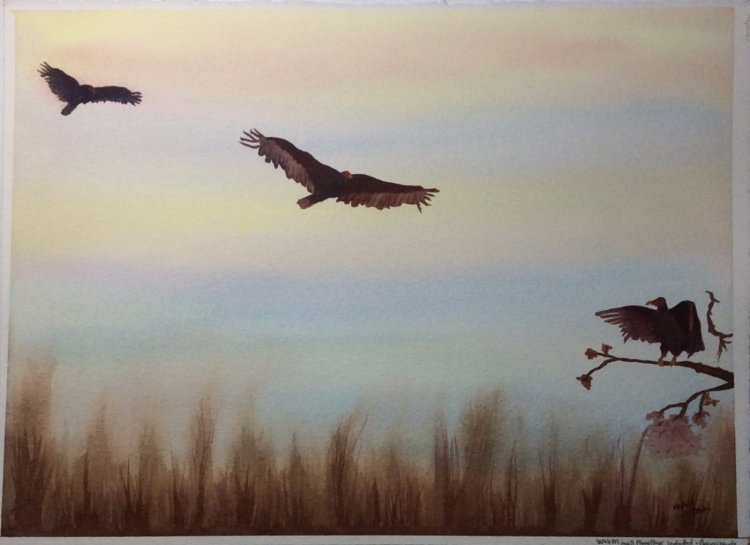"#Worldwatercolormonth 2018 day 8 ""flying things"" Vultures are no question my favorite fl"