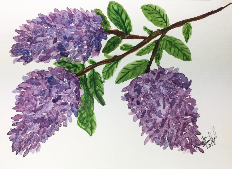 Day 12 of World Watercolor Month … Prompt – Fast & Loose so I did some Lilacs. Still not