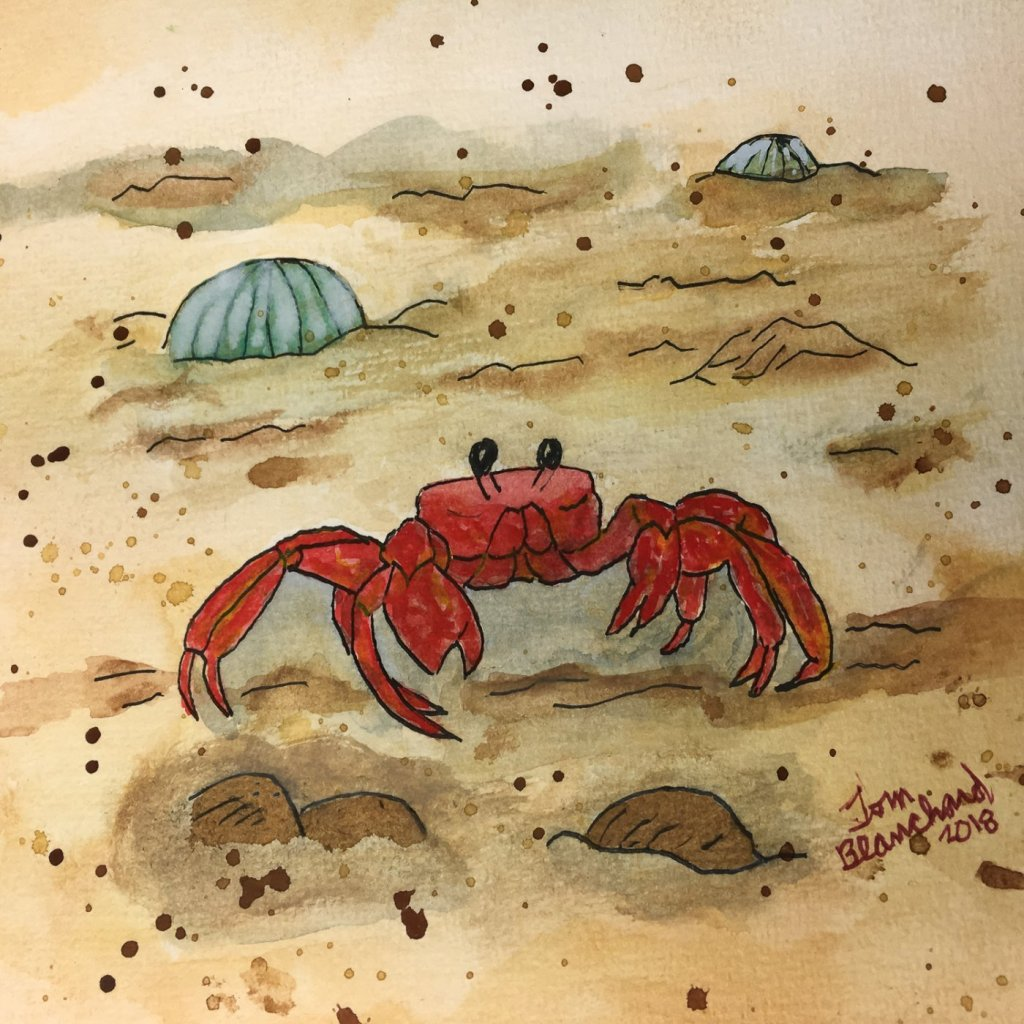 Day 15 of World Watercolor Month … Prompt – On The Beach … Felt a little crabby! #worldwat