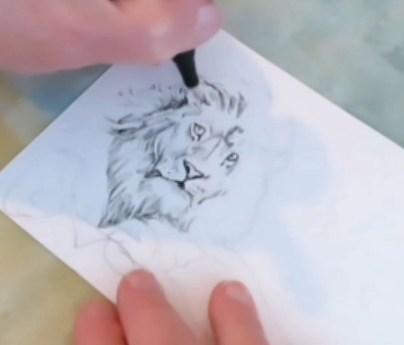 Drawing A Lion - Doodlewash