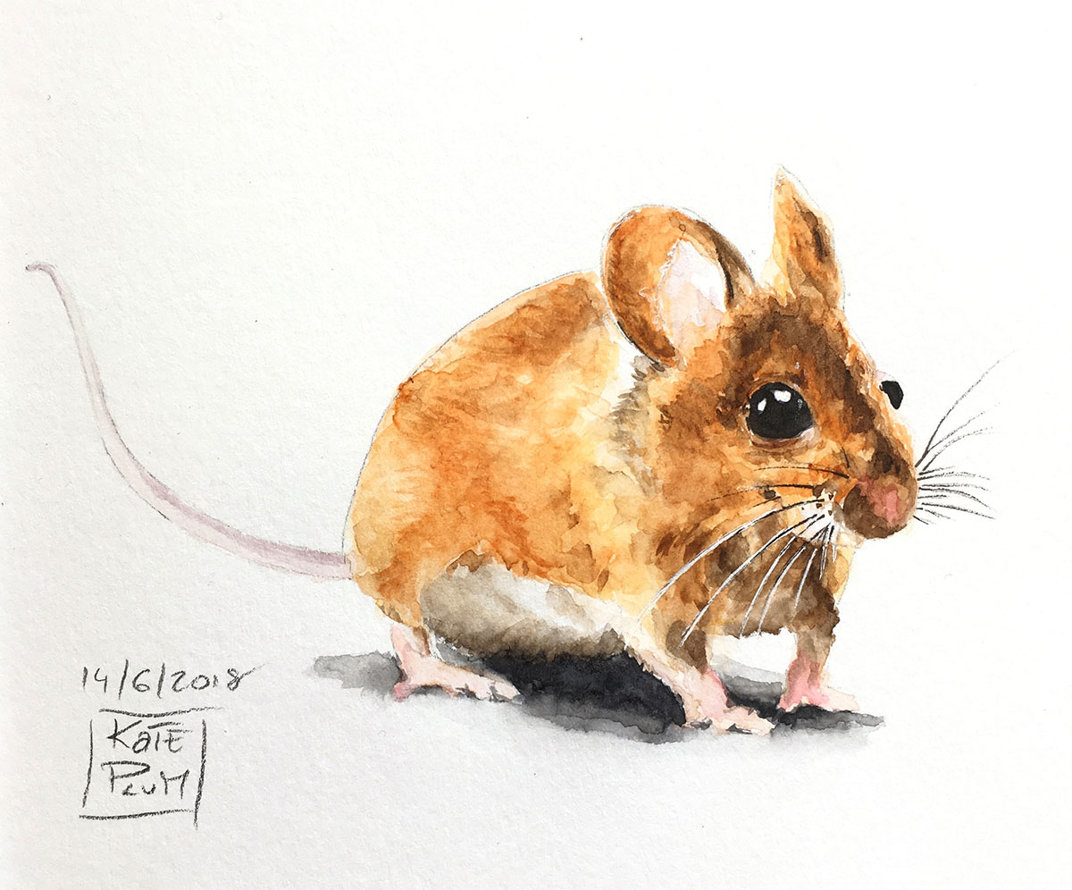 Mouse Watercolor Painting by Kate Plum - Doodlewash