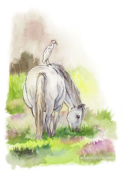 Camargue Horse Watercolor by Amy Giglio - Doodlewash