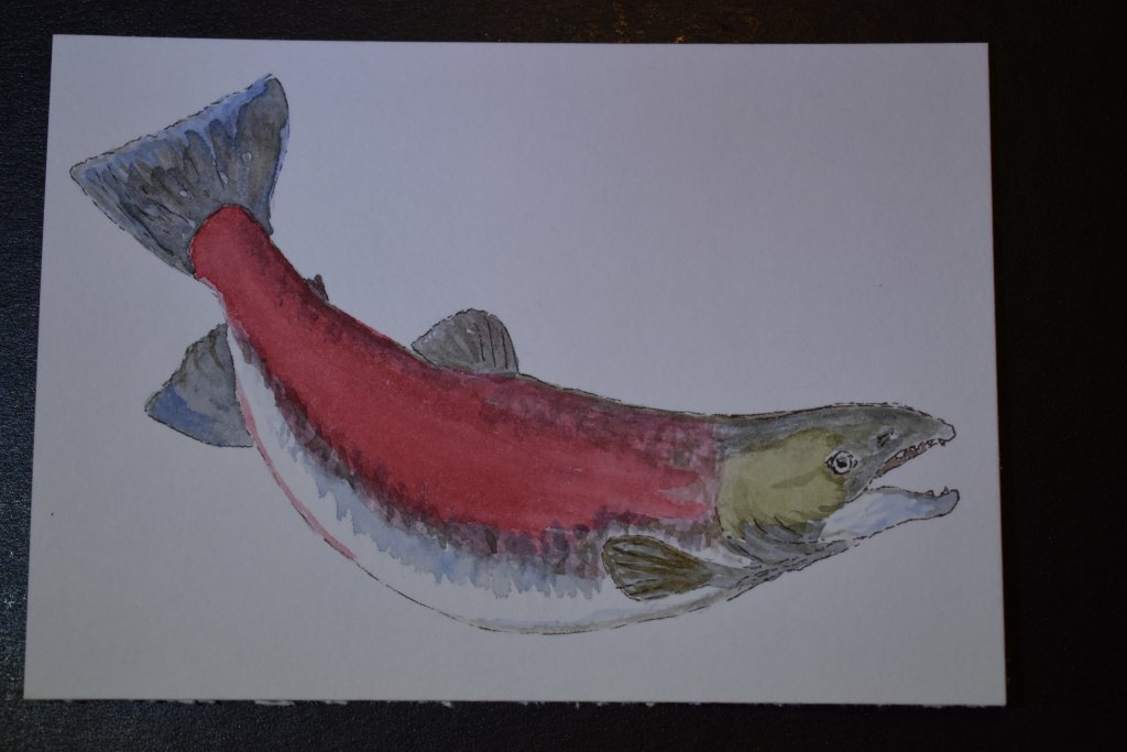 Aug 28, 2018 Ocean creatures.This is a female kokanee , which never actually go to the ocean like th