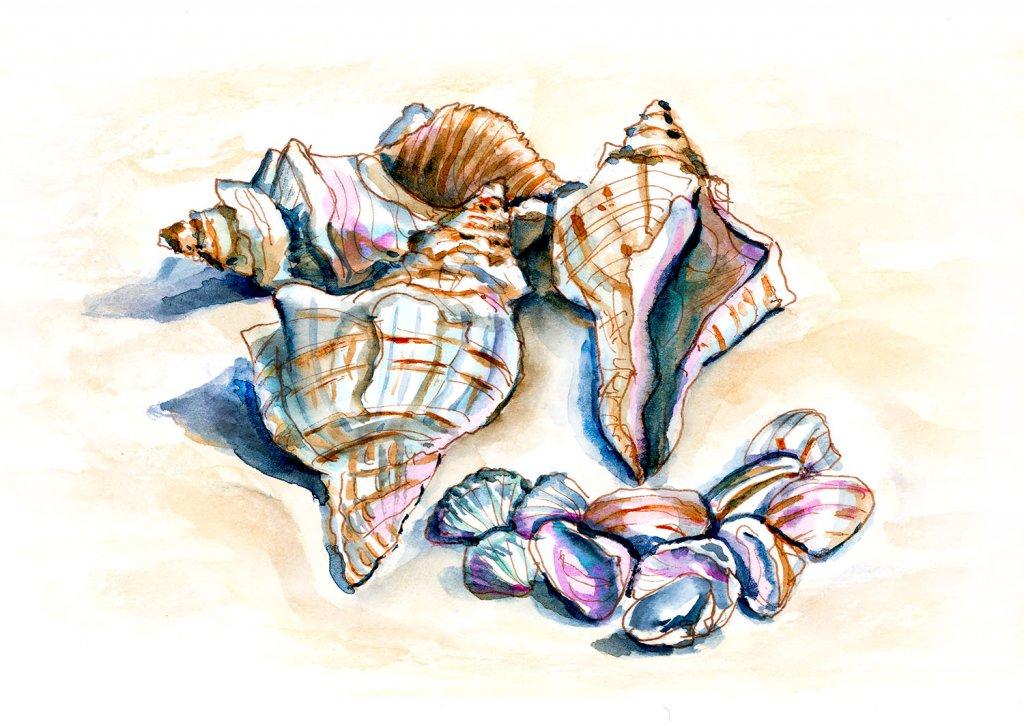 Day 31 - Beach Souvenirs Seashells Watercolor - Doodlewash