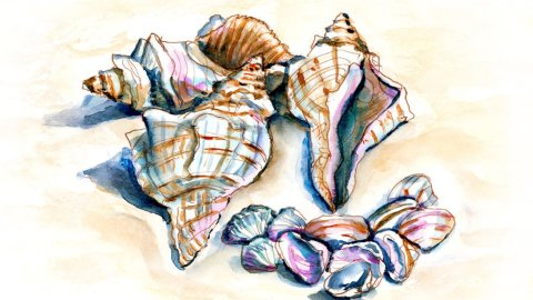 Day 31 - Beach Souvenirs Seashells Watercolor - Doodlewash