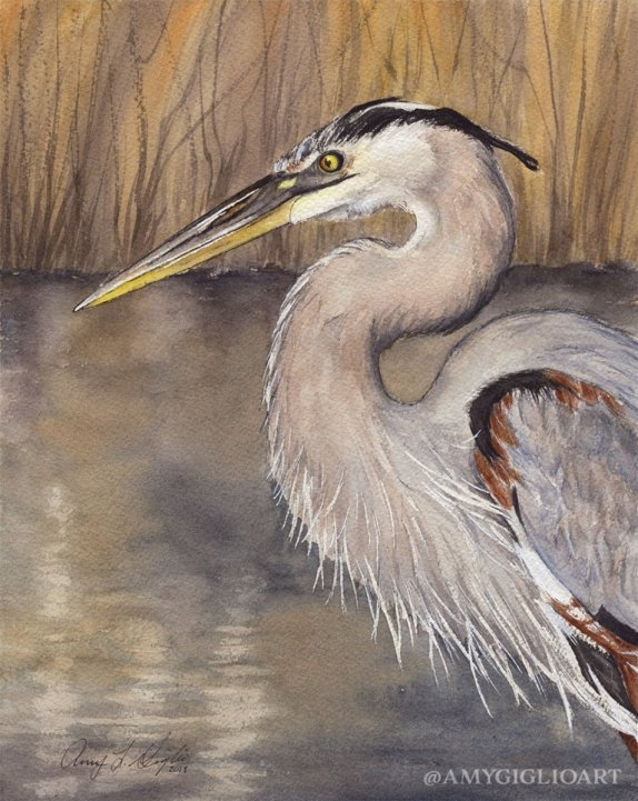 Grey Heron Watercolor by Amy Giglio - Doodlewash