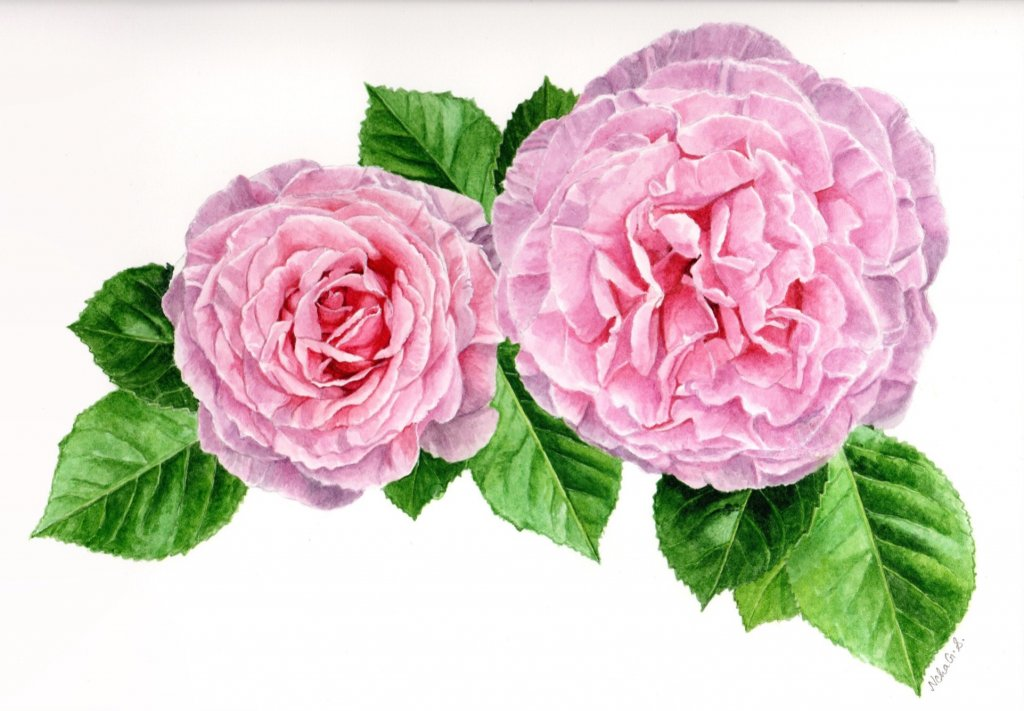 Pink Flowers Watercolor Painting by Neha Subramaniam - Doodlewash