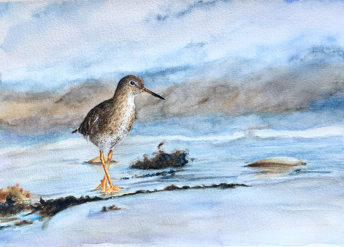 Bird Watercolor Painting by Kate Plum - Doodlewash