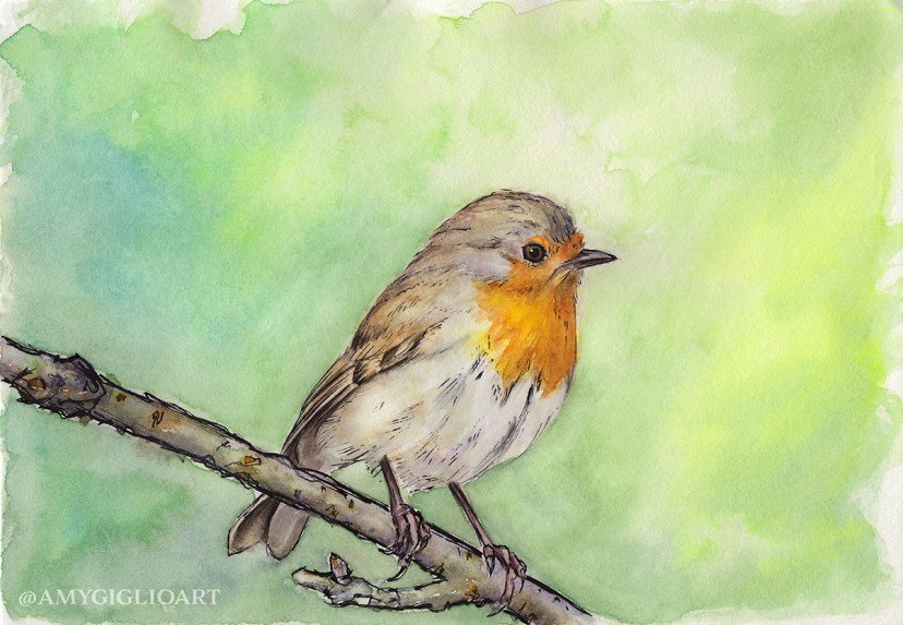 Robin Sketch Watercolor by Amy Giglio - Doodlewash