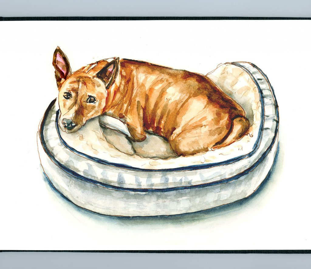 Day 11 - Make Your Bed Day Basenji Watercolor - Doodlewash