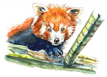 Day 15 - Red Panda Day Watercolor Painting Illustration - Doodlewash