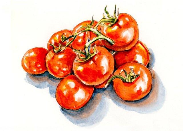Day 28 - Hug A Vegetarian Day Tomato Watercolor - Doodlewash