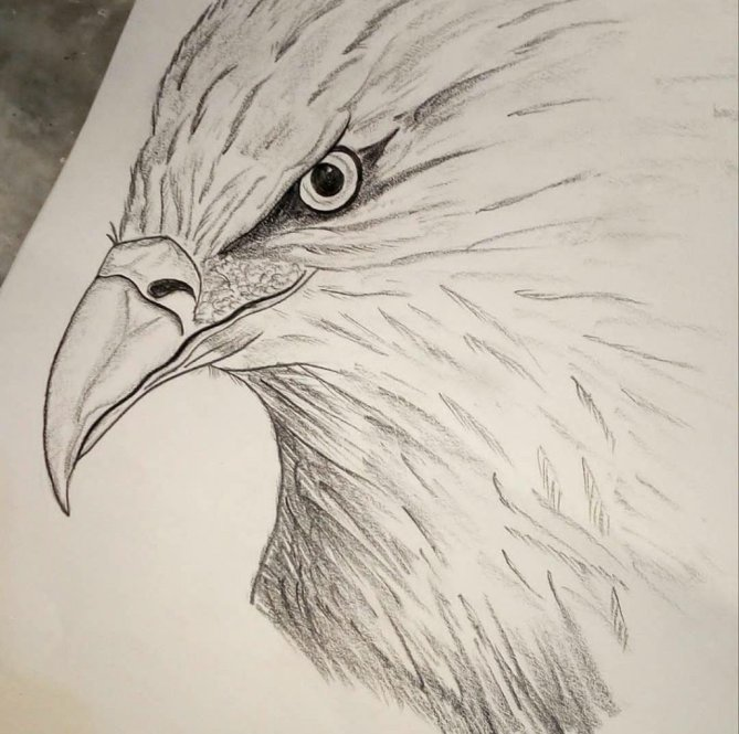 Eagle Sketch by Sonia Dutta - Doodlewash