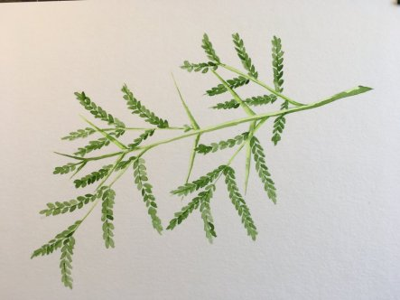 This has taken me a few days to complete, but it was well worth the effort. The foliage is an Acacia