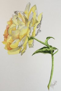 My second rose with Louise de Masi on Skillshare. fullsizeoutput_4d6