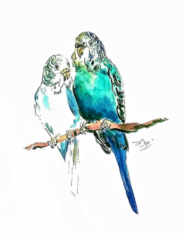 Budgies Watercolor by Thomas Mühlbauer - Doodlewash